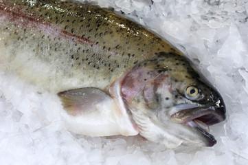 poisson au marché