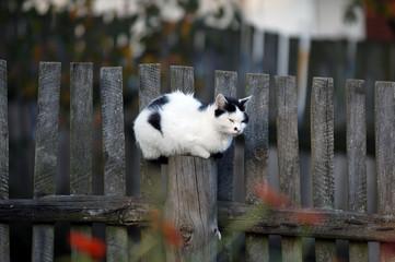 Katze am Zaun - Wachposten