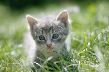 Little cat in a green grass