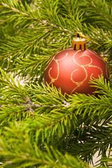 Christmas ball on fir branch