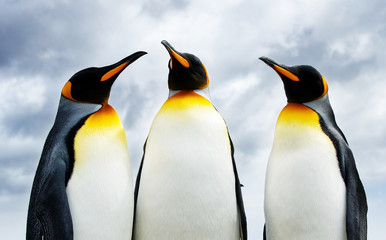 Poster de jardin Antarctique Three King Penguins