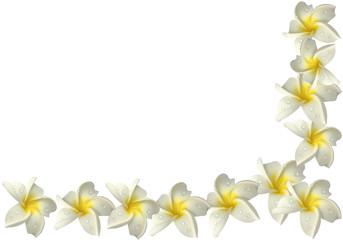 coin de fleurs blanches de frangipanier