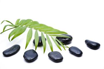 Pflanze und Stein