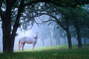 Horse in Foggy Morning Woods