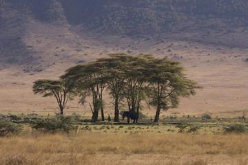 Poster Afrique Africa Ngorongoro crater