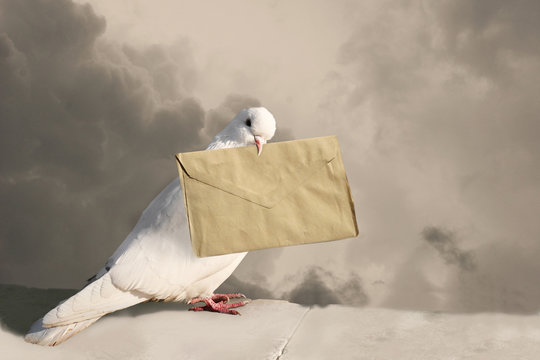 White Dove with old letter