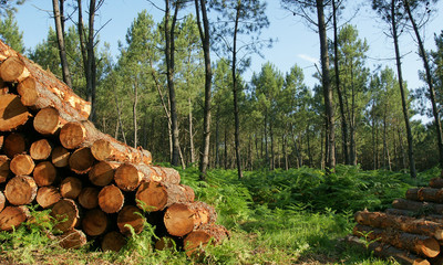 decoupe de bois Fotobehang