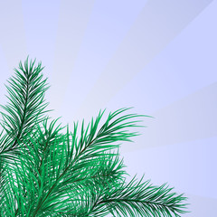 Framework from green pine branches. Vector illustration