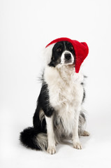 santa dog isolated