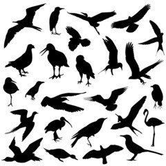 set of bird vector