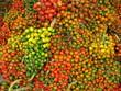 Pupunha Früchte, Pfirsichpalme (Bactris gasipaes)
