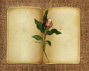 open old book with rose on the sacking background