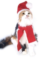 Tricolored Christmas cat