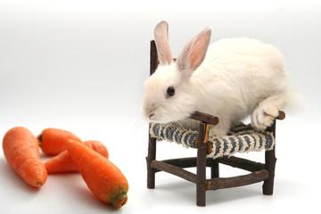 Rabbit Bcsa