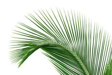 palme verte sur fond blanc