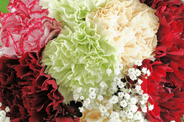 Poster de jardin Macro roses