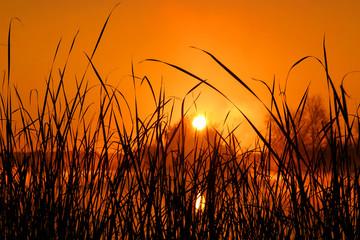 sunrise in rush