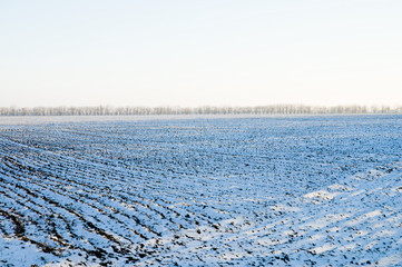 winter rows