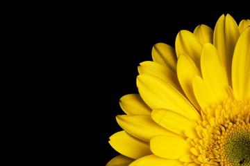 fiore gerbera