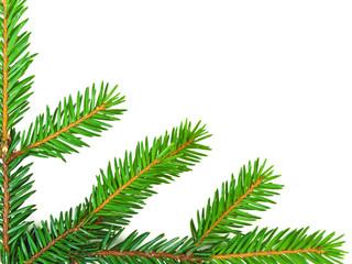 fir corner