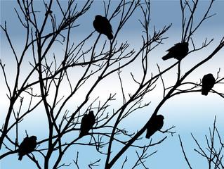 birds on tree in winter