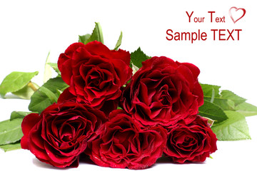 Bunch of beautiful red roses isolated over white