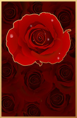 Romantic Card With Many Red Rose