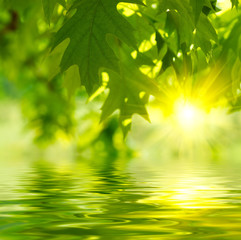 Fototapete - Green leaves reflecting in the water