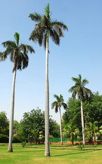 Palm trees in a garden