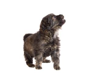 Cute puppy dog brown