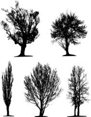 Black tree silhouettes on white background