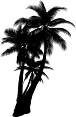3  vector tropical palms and trees