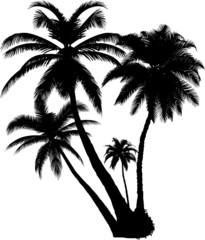 4 vector tropical palms and trees