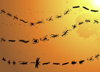 insects procession isolated over a warm grunge background