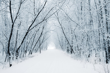 Winter White Alley