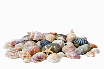 various color shells isolated on white