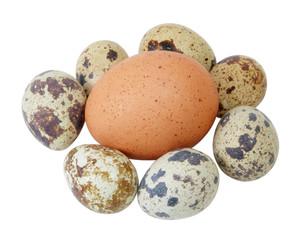 Coturnix eggs