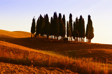 Hügelland mit Zypressen