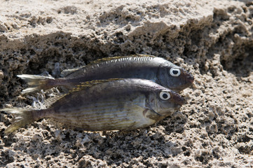Two fish on the shore