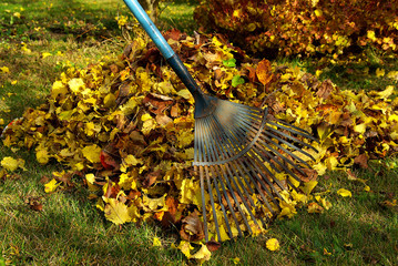 Laub harken - leaves rake 02