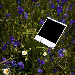 instant photo frame in grass background