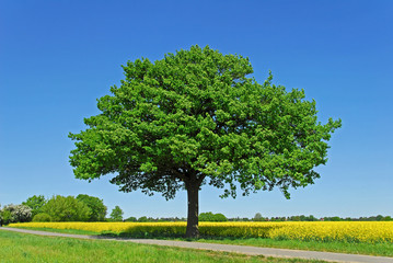 Poster Trees Baum, Eiche