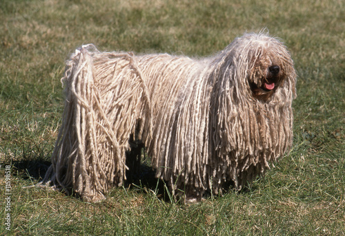 Dog Breed With Dreads
