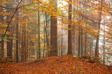 Autumn scene in the forest