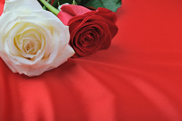 two rose on satin