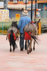 Donkey driver in a holiday resort