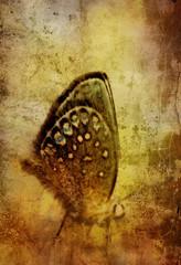 Foto auf AluDibond Schmetterlinge im Grunge grunge butterly