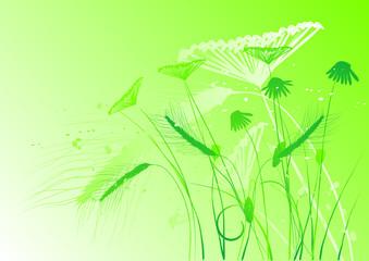 floral background, meadow, garden