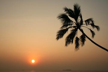 Contemplation of sunset