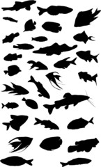 thirty two fish collection